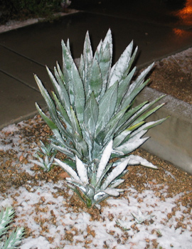 Pictures of snow in Tucson, AZ